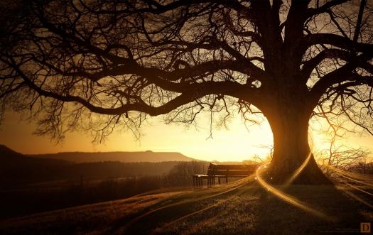 Landscape-Sunrise-Wallpaper.jpg